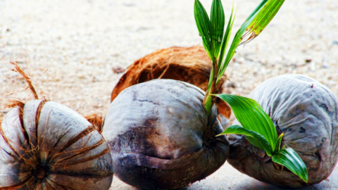 Geheimtipp Kokosöl – der Allrounder fürs Surfen.