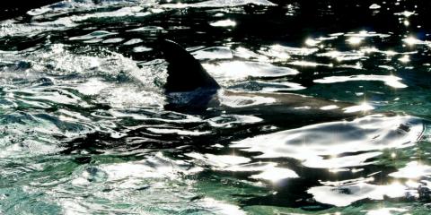 Die Angst vor Haien meistern